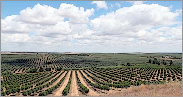 Região do Alqueva no Alentejo. Exposição a pesticidas preocupa