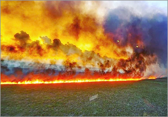 Fogo na Amazónia: Ambiente em risco...