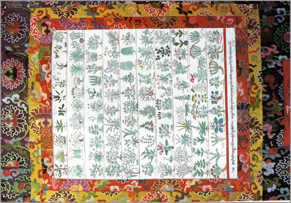 Ervas da medicina tibetana