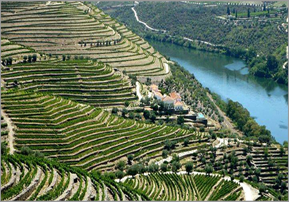 socalcos do Douro com vinhedos