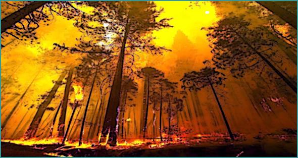 Defesa da floresta contra incêndios