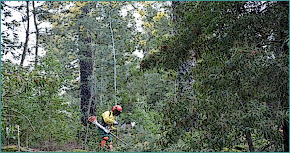 Limpeza das florestas deve ser feita até 30 de Abril