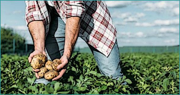 Boa notícia:  Governo antecipa pagamento de fundos comunitários para a agricultura