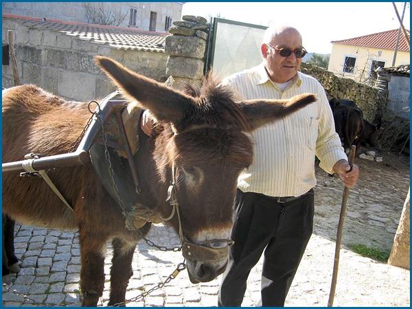 Os burros são animais dóceis e pacientes