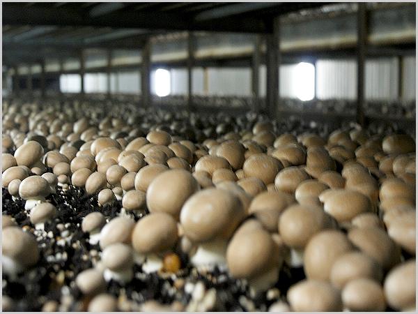Pró-Raia abre concurso para a abertura de empresas ou modernização de equipamentos agrícolas nos concelhos do Sabugal e Guarda