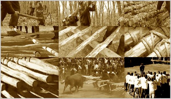 Construção do Forcão: desde o corte dos paus, sua montagem até à lide do touro.