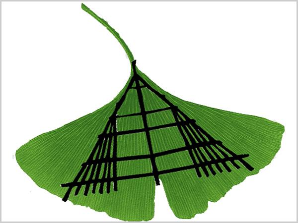 Folha de ginkgo biloba com imagem sobreposta de um forcão! Símbolos de resiliência e resistência