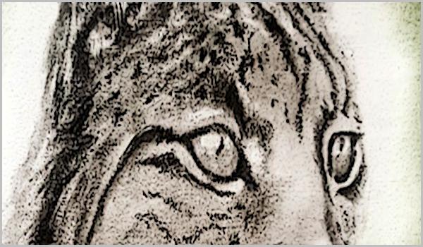 Lince Ibérico: «homenagem» em Penamacor