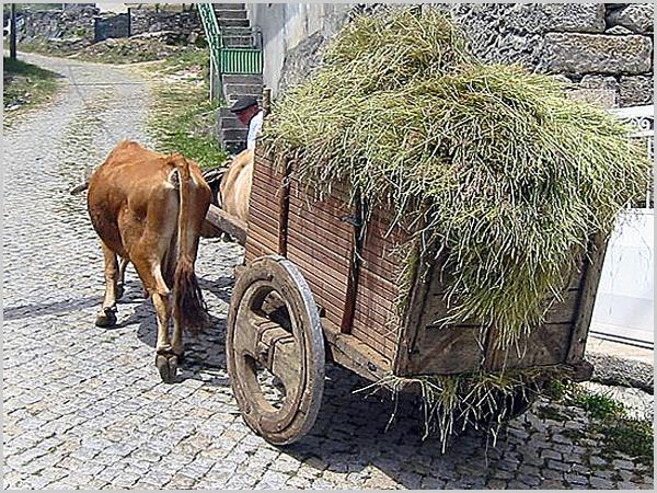 Carro de vacas (bem sei que no Casteleiro as rodas não eram assim...)