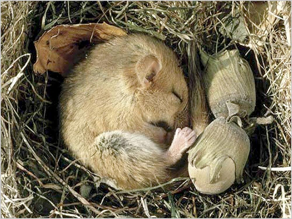 Vou hibernar!