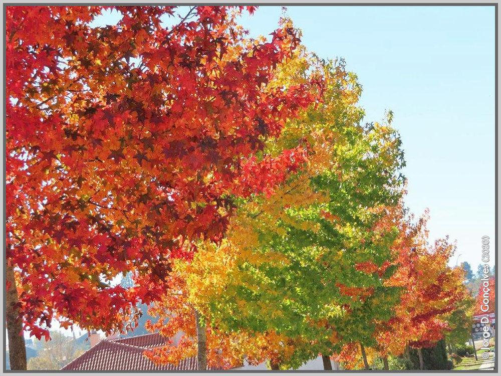 Folhas de Outono na entrada do Sabugal - capeiaarraiana.pt