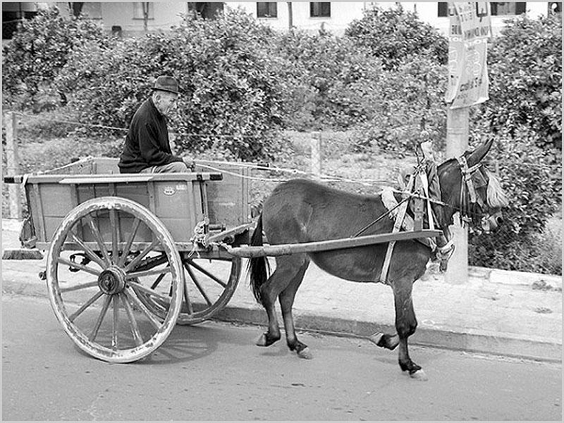 Carroça dos vendedores ambulantes - capeiaarraiana.pt
