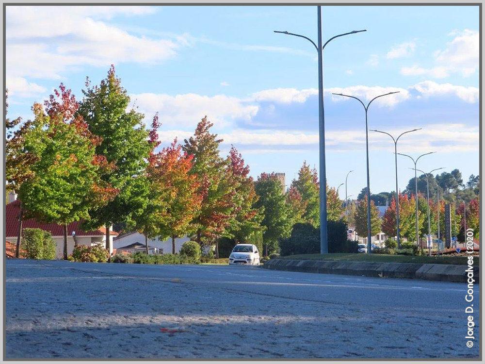 Avenida na entrada no Sabugal - capeiaarraiana.pt