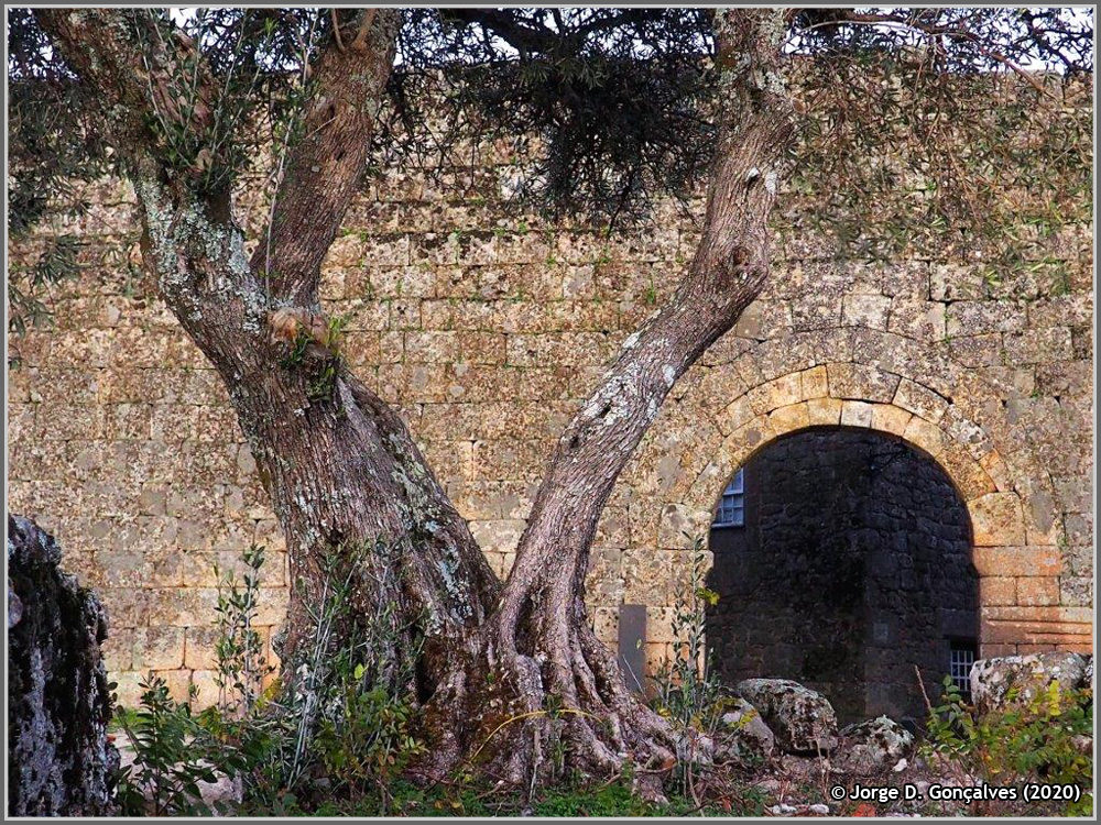 Muralha da Aldeia Histórica de Sortelha - Jorge Gonçalves - capeiaarraiana.pt
