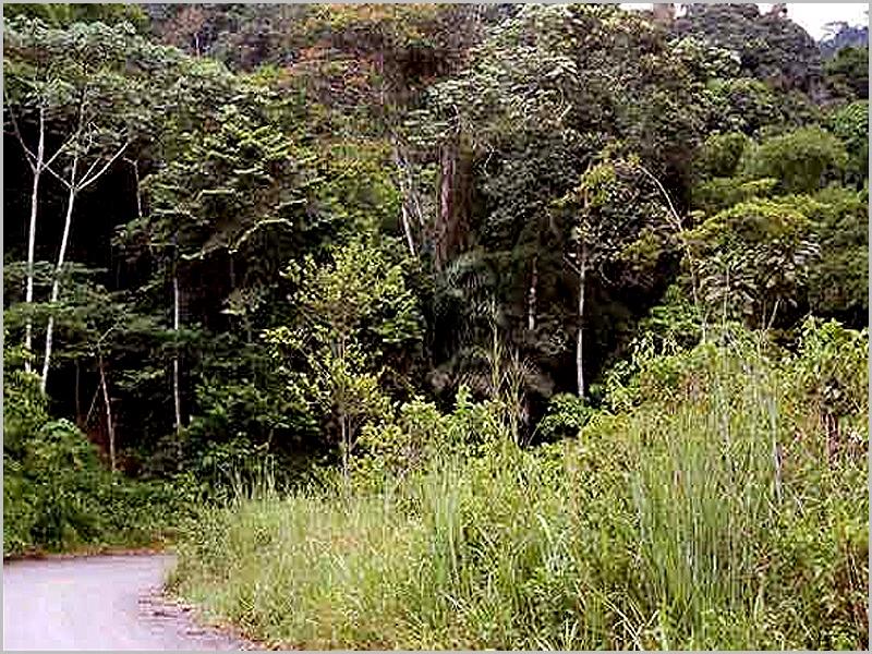 Aqui passei mais de dois anos: na floresta virgem do Maiombe