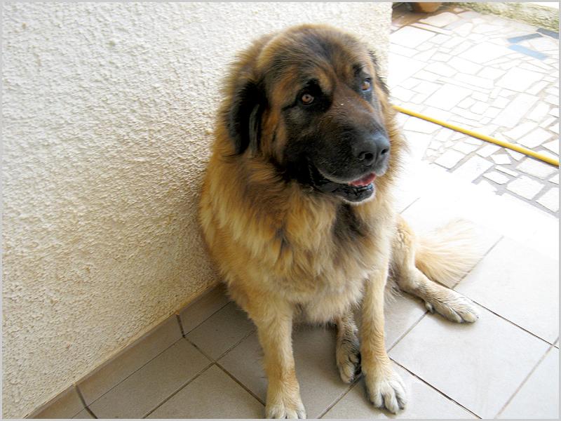 Amai os anmais! cão