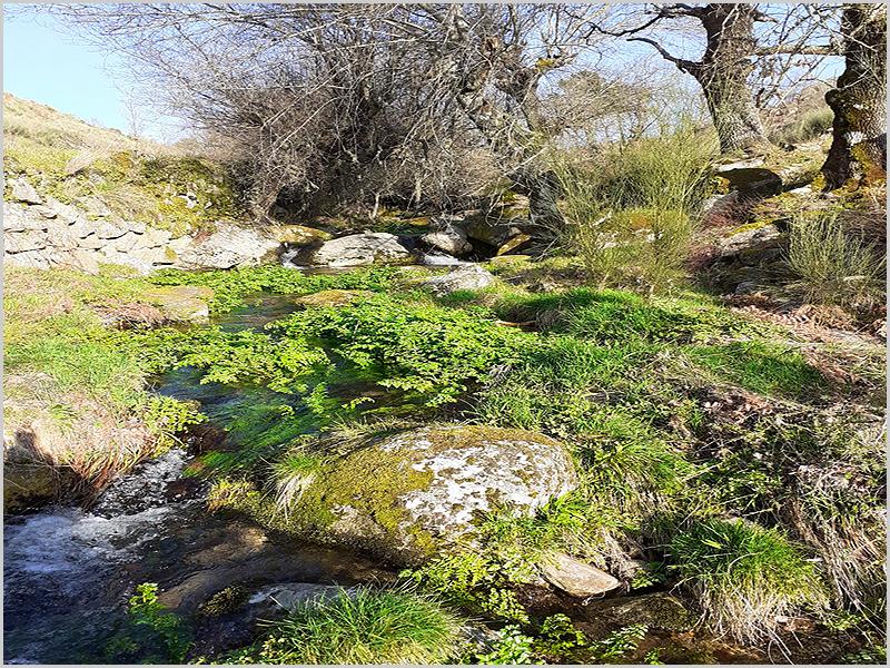 Ribeira do Vale dos Covões com as suas águas cristalinas