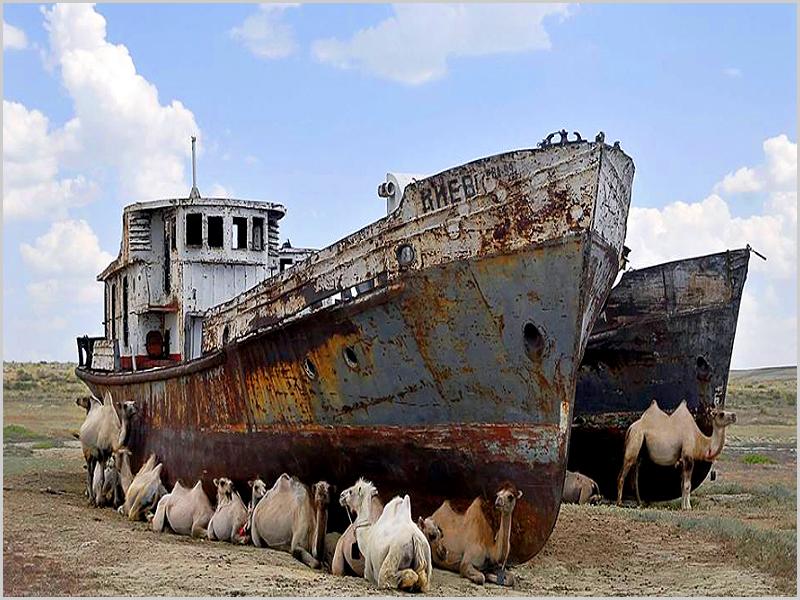 Dromedários à sombra de um barco no deserto de Aral
