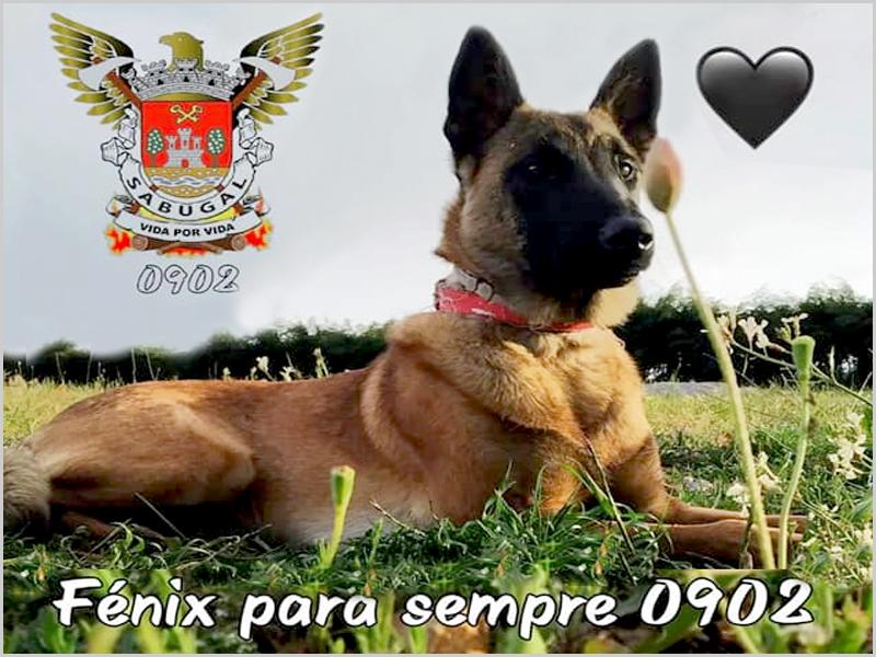 Faleceu a cadela Fénix do Corpo de Bombeiros do Sabugal