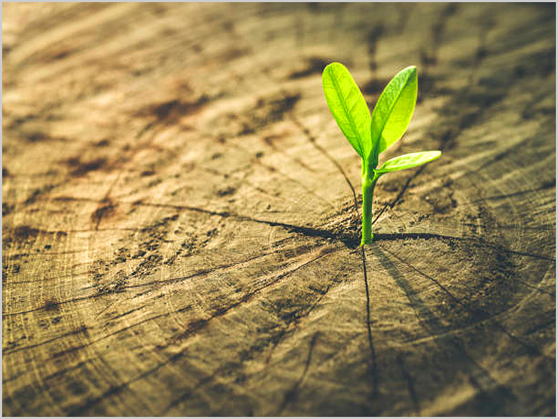 Tudo acaba e recomeça e a constante mutação é da natureza da vida