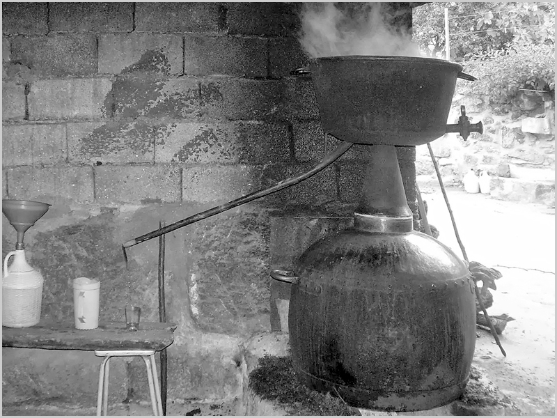 Fabrico de bagaço no alambique de cobre
