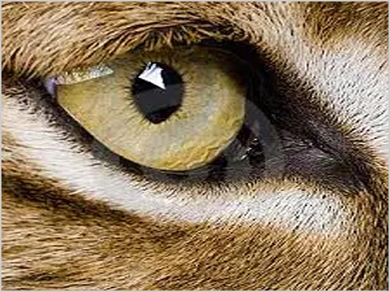 Descobrir com «olho de lince» e conservar a Natureza