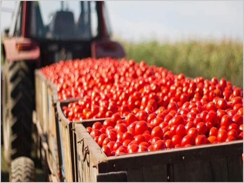 Promover o agroalimentar na nossa Região