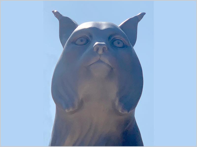 Justa homenagem ao lince ibérico da Malcata que não está ainda livre da extinção