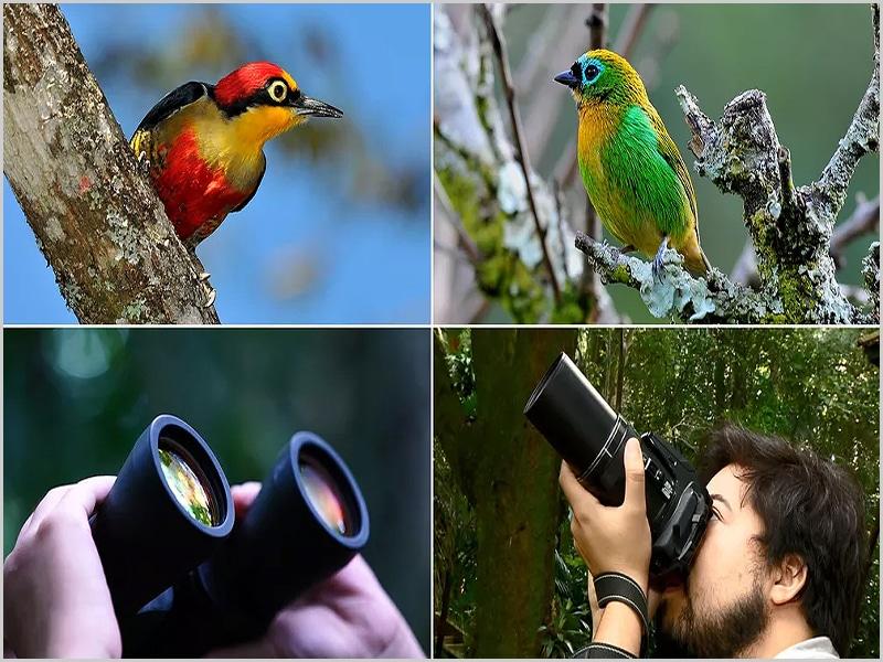 1 a 3 de Outubro foi o Fim-de-semana Europeu de Observação de Aves na nossa zona
